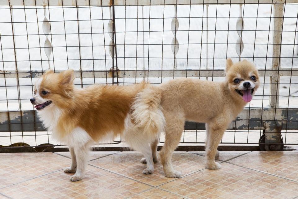 Собаки После Секса
