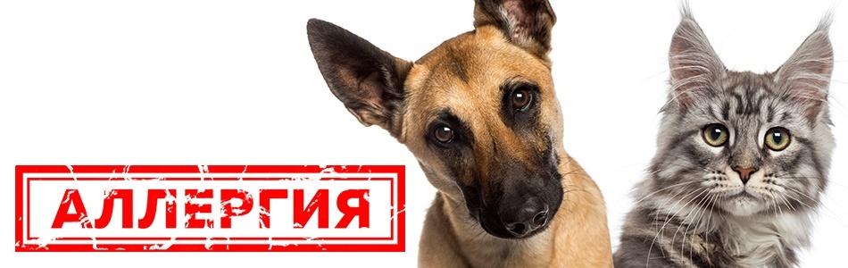 профилактика аллергии у собак
